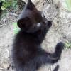 Gato Negro - Surveco