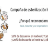 Campaña de esterilización canina - Surveco