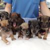 Camada 6 cachorritos talla pequeña - Surveco
