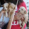 5 Cachorritos de la calle - Surveco