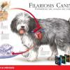 Filariosis Canina - Surveco