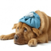 Campaña contra la gripe - Surveco