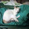 gata de 4-8 meses recogida de la calle muy cariñosa - Surveco