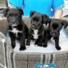 Cachorros cruzados 2 meses - Surveco