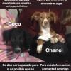 Coco y Chanel - Surveco