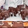 cachorritos 1,5 mes - Surveco