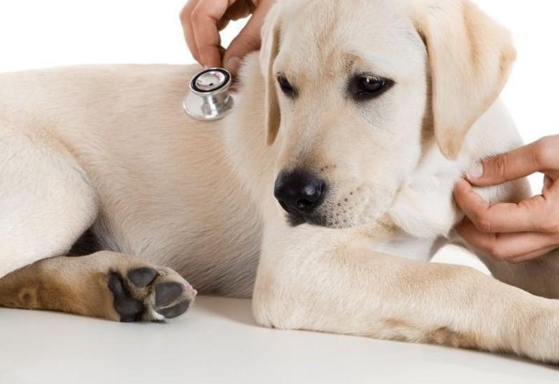 clinica-veterinaria-cordoba-surveco