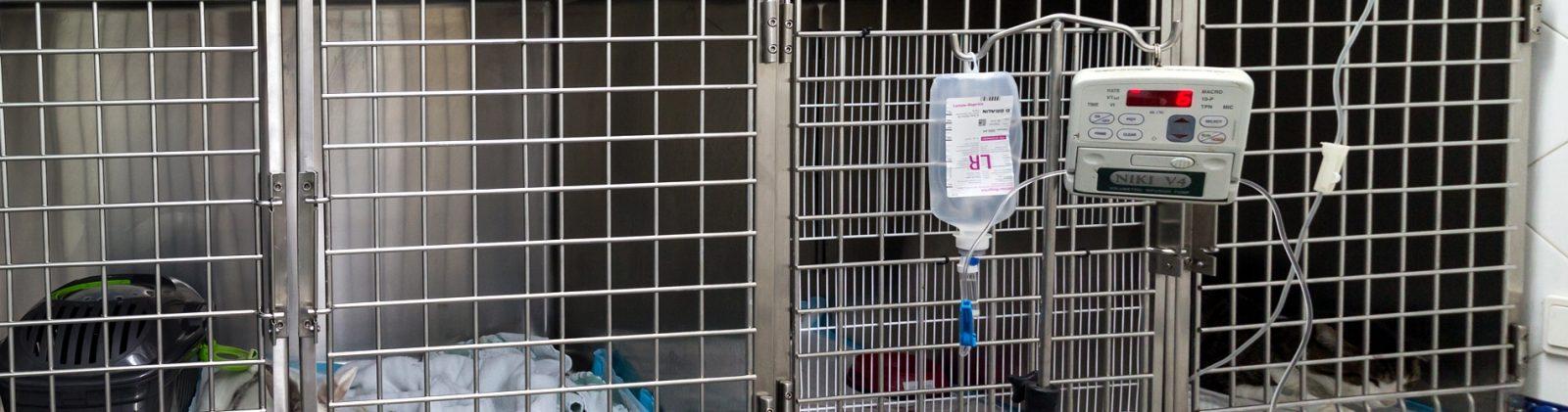 surveco-veterinarios-en-cordoba-hospitalizacion-4