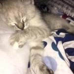 gato vicki 1