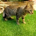 9 agosto gatito