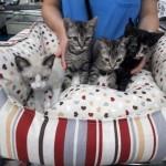 gatos 30 agosto a