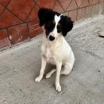 16 marzo 3 madre cachorros con pincher