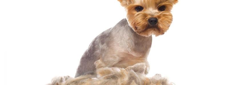 ¿Rapar perros? (I): las alternativas saludables. - Surveco