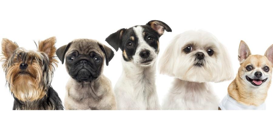 ¿Rapar perros? (II): las alternativas saludables. - Surveco