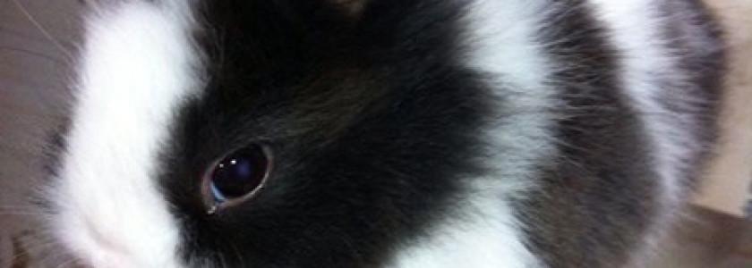 Cuidados y Conocimientos sobre nuestros conejitos domesticos - Surveco