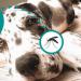Campaña de Surveco Veterinarios contra la Leishmaniosis - Surveco