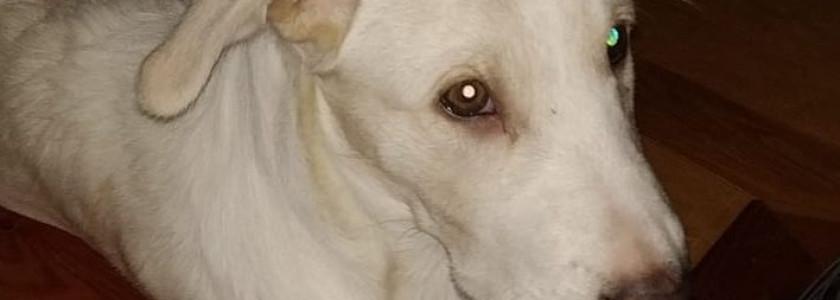 Cachorra de 4 meses - Surveco