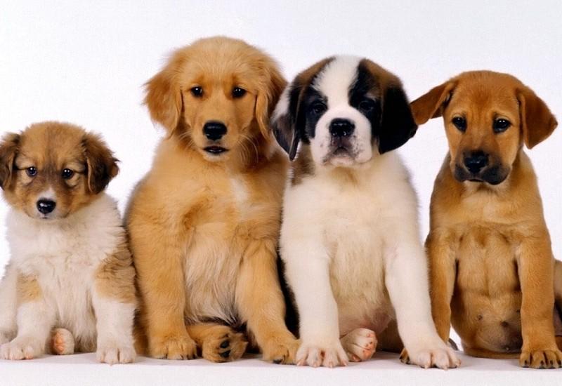 cachorros-cordoba-surveco