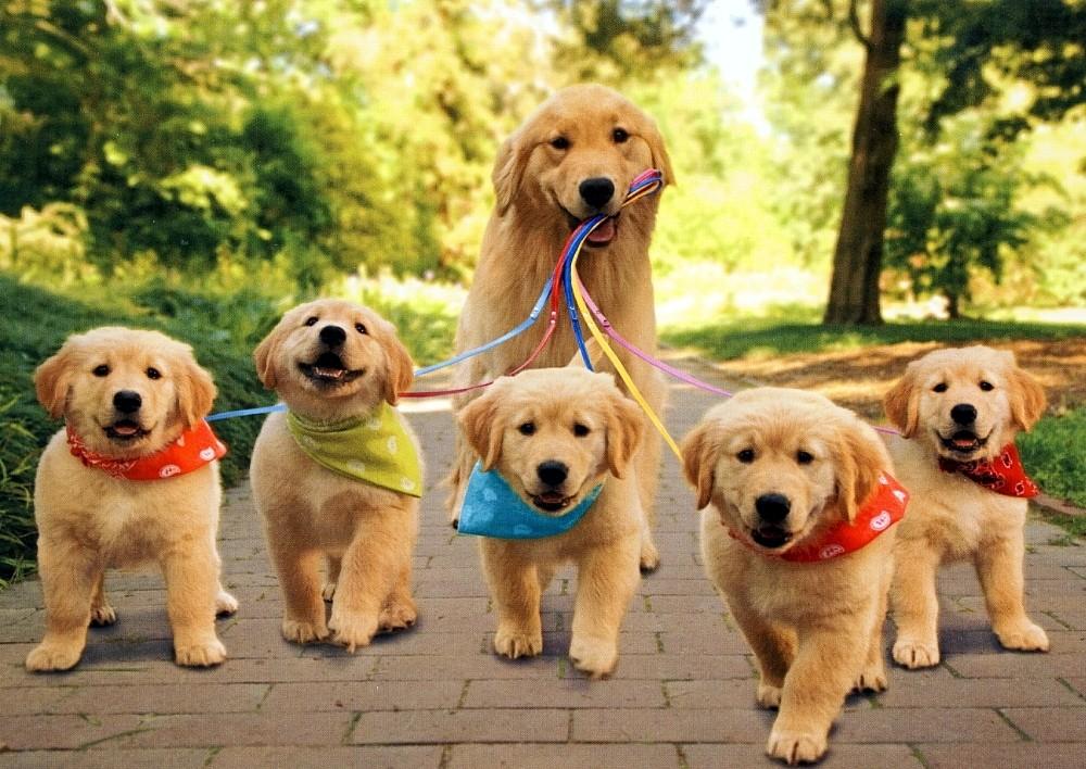 perro-cachorros