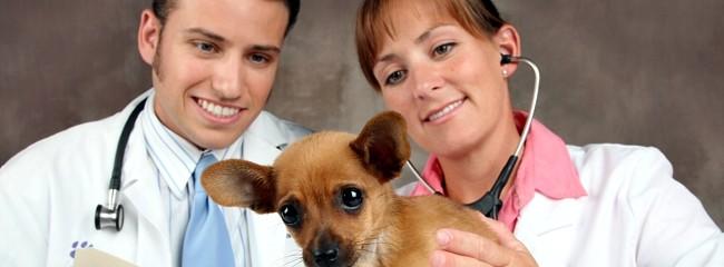 clinica-veterinaria-cordoba-equipo-medico