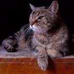 gato-1-carta-clientes-clinica-net-15-09-17
