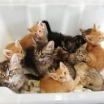 12 junio gatos sadeco 1