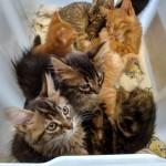 12 junio gatos sadeco 2