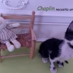 28 junio gato 1