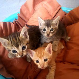 Gatitos, hembras y macho - Surveco