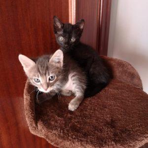 Gatitos hembra y macho - Surveco