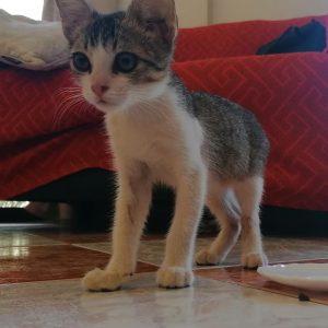 Gatito rescatado de la calle - Surveco