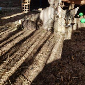Gatita y sus bebés buscan adopción - Surveco