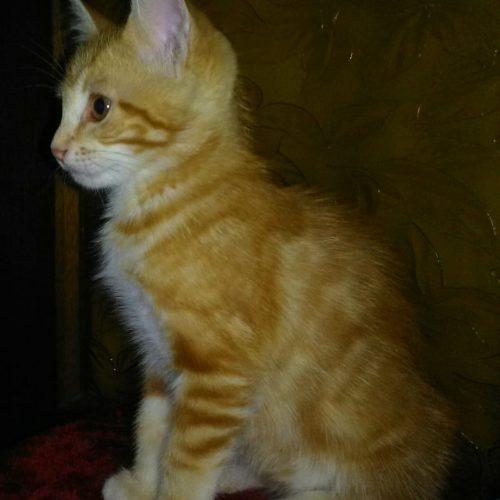 Gato macho 3 meses - Surveco