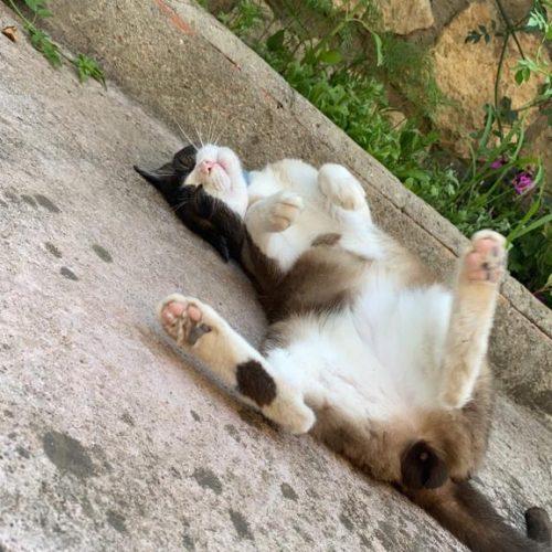 Gatos - Surveco