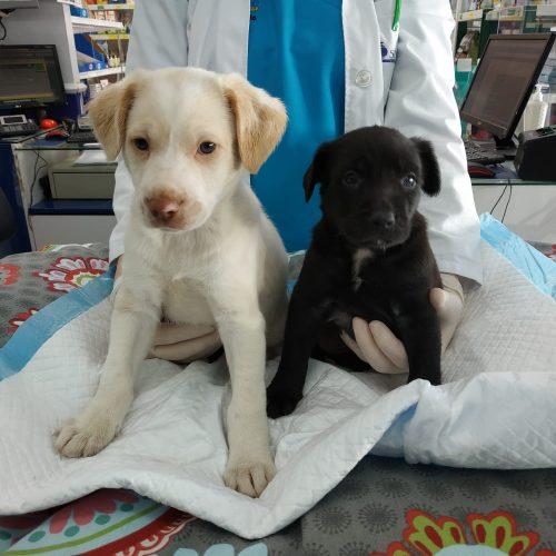 Cachorritos abandonados ( YA ADOPTADOS) - Surveco
