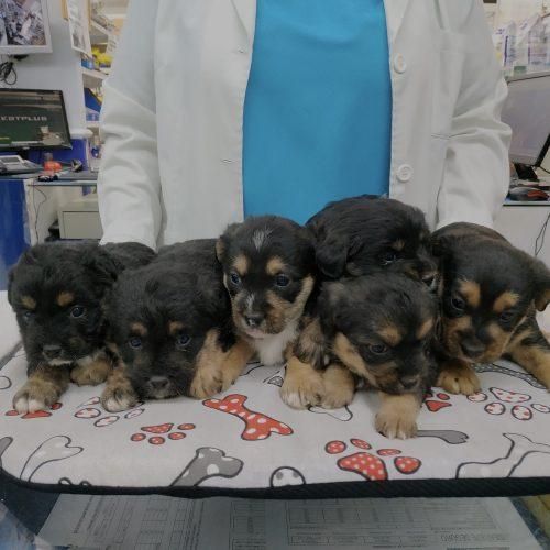 6  cachorros cruzados 40 dias - Surveco
