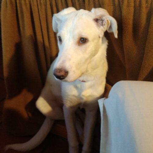 Cachorra de 6 meses - Surveco