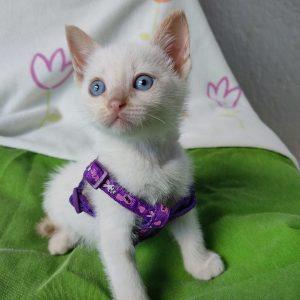 Gatitos blancos - Surveco