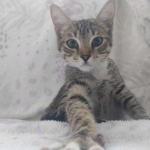Gatitos de 5 y 2 meses - Surveco